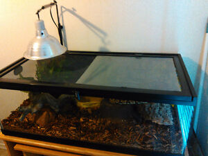 Pet snake, tank and accessories