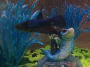 3 gallon fish tank with betta fish