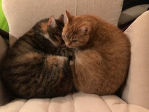 2 chats à donner
