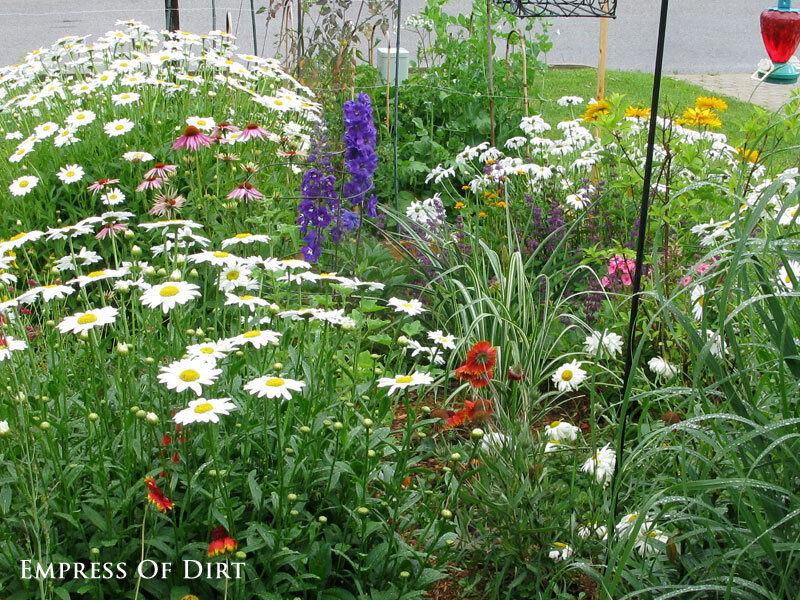 Perennials in my front garden