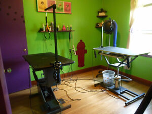 DISCOUNTED DOG GROOMING-HOME BASED-small and medium dogs only