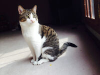 Male cat Louie looking for a new loving home - for free