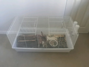 Dwarf rabbit/huge cage