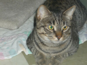 """Max Kerman"" the Cat is Available for Adoption!"