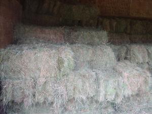 hay ,good green alpha,timothy meadow grass mix