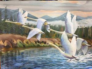 Trumpeter Swans Rising over Somenos