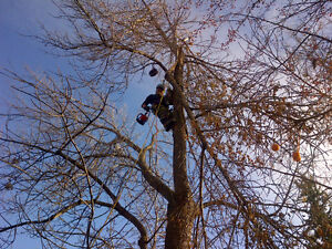 Woodtec Tree Services - Professional tree removal & pruning