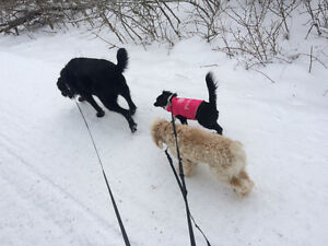 Dog walking, Pet Sitting, Pet Taxi and more!