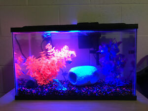 BRAND NEW aquarium, fish, decorations, food, and much more!