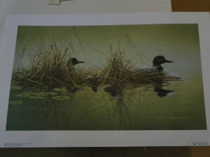 Derick Wicks Hideaway Common Loons, signed and #