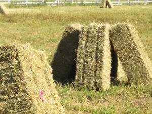 Fresh Baled Hay for Sale