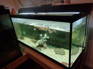 5 aquariums for sale