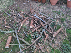 Free wood from trees including logs