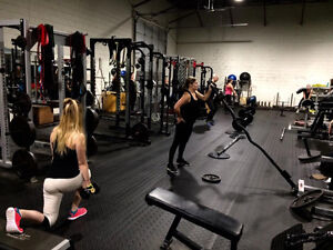 *** Women Group Training - Free Fat Loss Program! *** Kitchener / Waterloo Kitchener Area image 4