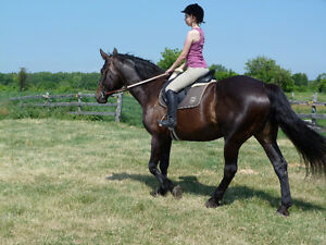 Beautiful 17.1hh Draft X Mare Kawartha Lakes Peterborough Area image 4