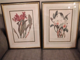Pair of Framed and Mounted Floral Prints