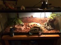 Gecko tank with all accessories and GECKO