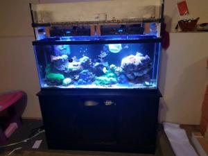 55 gallon saltwater setup