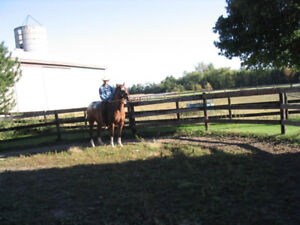 Roping / Cutting / Working  Horses.