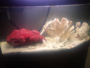 Aquarium salt wanted  and other items