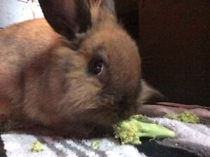 Rabbit looking for good home
