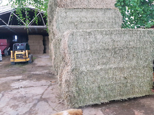 2017 first cut large squares of hay