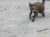 lost tortis shell cat very special cat