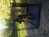 Very Large Pet Lodge Kennel/ crate
