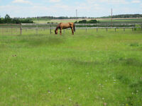 Horse Board / 275.00/ month  -10 mins west of Spruce Meadows