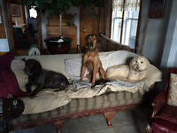 """DOG BOARDING IN MY HOME """"DON'T IMPOUND YOUR POOCH"""""""
