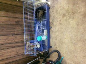 Bunny free to a good home Cambridge Kitchener Area image 4