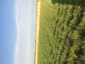 Large Round Grass Bales for Sale