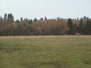 Large Englefeld Lot
