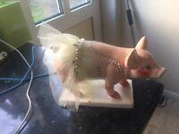 Party piggies by parastone