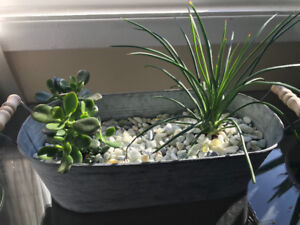 Succulent Garden (Extra Large)
