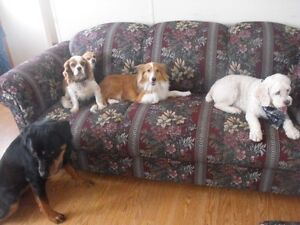 HI DOG SITTER FOR $ 20.00 A DAY Peterborough Peterborough Area image 6