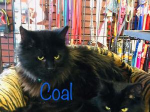 bonded pair Coal & Crystal - pet valu upper james