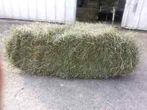 Second cut horse hay for sale