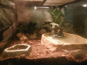 Hermit Crabs, Tank and Accesories/Decor