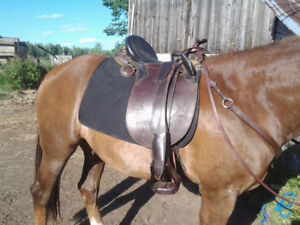 Two Tone Leather Aussie Saddle