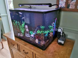 AquaOne 100L established tropical fish tank.