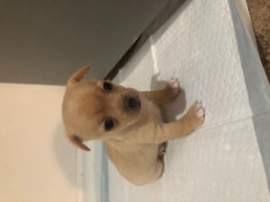 Looking for a forever home