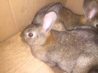 Rabbit two