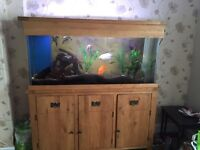 5 Foot Fishtank With Integrated Pump System And Wooden Cabinet••