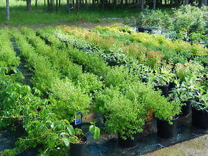 Locally Grown Shrubs,Trees,Plants.