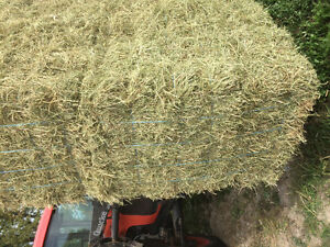 small square hay bales in 21 bales per bundle