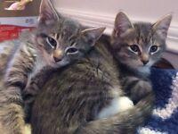 Chatons & chats pour adoption Refuge Ronronne avec moi