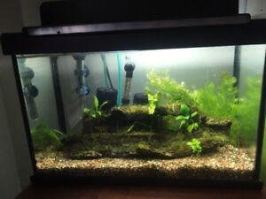 5 gallon aquarium all/tout included + orange shrimp/crevettes