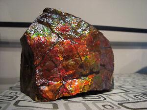Ammonite / ammolite display piece