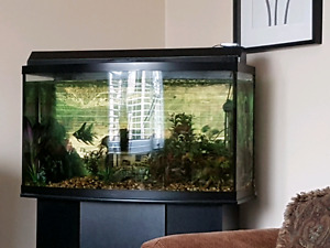 46 gallon bow tank